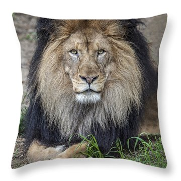 Male Lion Portrait Throw Pillow
