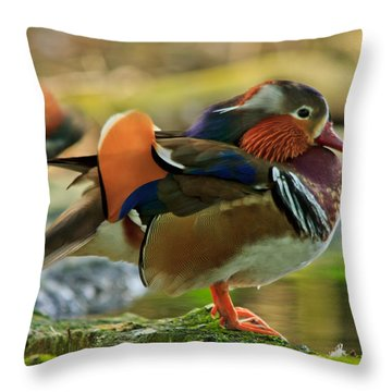 Throw Pillow featuring the photograph Male Mandarin Duck On A Rock by Eti Reid