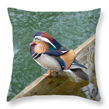 Throw Pillow featuring the photograph Male Mandarin Duck Sleeping At Pond Edge by Menega Sabidussi