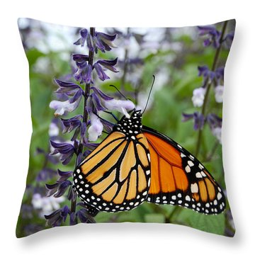 Throw Pillow featuring the photograph Male Monarch Butterfly  by Eva Kaufman