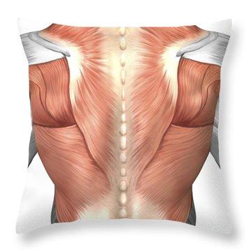 Muscle Tissue Throw Pillows Fine Art America