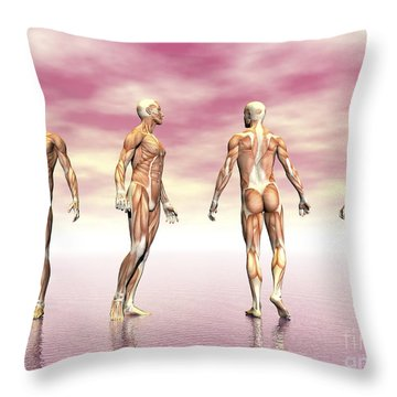 Male Muscular System From Four Points Throw Pillow by Elena Duvernay