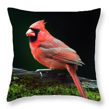 Male Northern Cardinal Cardinalis Throw Pillow by Panoramic Images