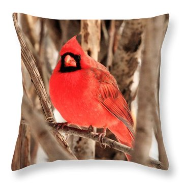 Male Northern Cardinal Throw Pillow by Michael Allen