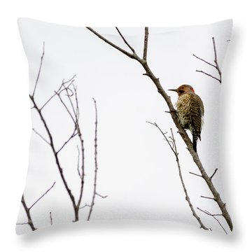 Male Northern Flicker Throw Pillow