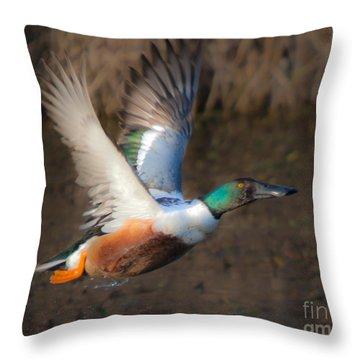 Male Northern Shoveler Throw Pillow