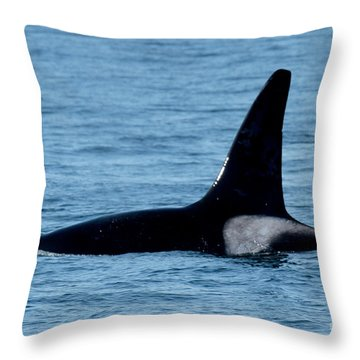 Throw Pillow featuring the photograph Male Orca Killer Whale In Monterey Bay 2013 by California Views Mr Pat Hathaway Archives