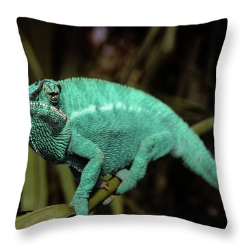 Male Panther Chameleon Chameleo Sp Throw Pillow
