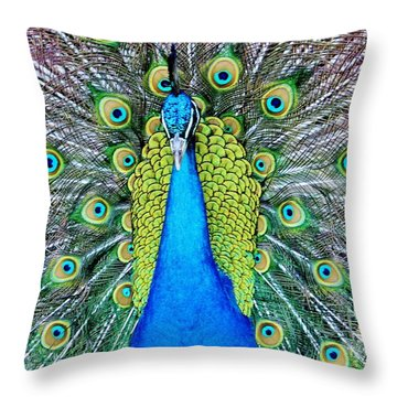 Male Peacock Throw Pillow