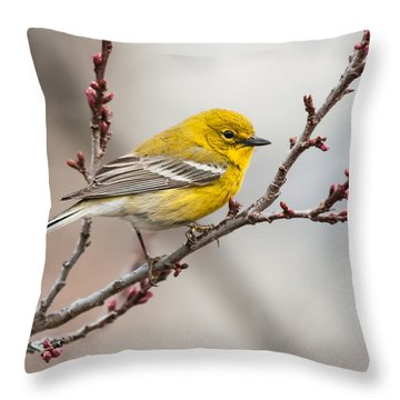 Male Pine Warbler 2 Throw Pillow