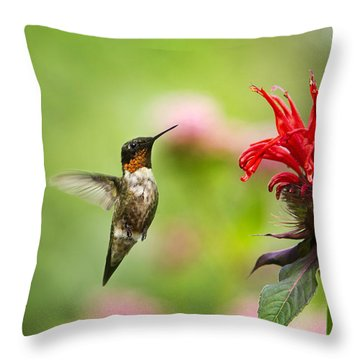 Male Ruby-throated Hummingbird Hovering Near Flowers Throw Pillow by Christina Rollo