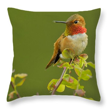 Male Rufous Hummingbird Throw Pillow by Tom and Pat Leeson