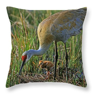 Male Sandhill With 4 Day Old Chick Throw Pillow by Larry Nieland