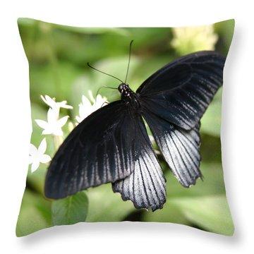 Male Scarlet Swallowtail Throw Pillow