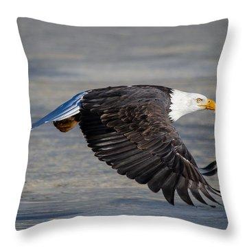 Male Wild Bald Eagle Ready To Land Throw Pillow