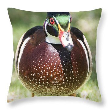 Male Wood Duck 2 Throw Pillow