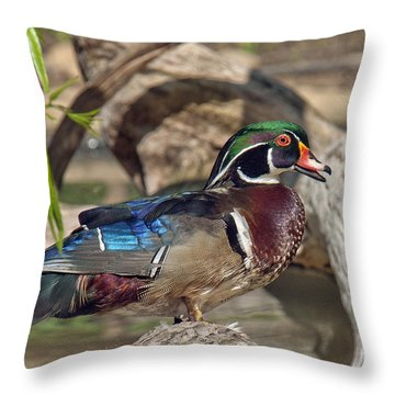 Male Wood Duck Dwf029 Throw Pillow