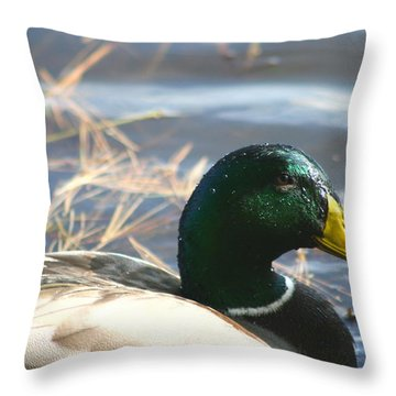 Mallard Anas Platyrhynchos Throw Pillow by Neal Eslinger