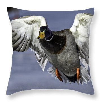 Mallard Drake Landing At Cherry Knolls Lake Throw Pillow