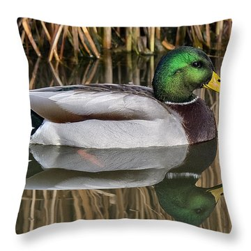 Mallard Drake Reflections Throw Pillow
