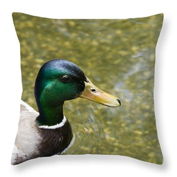 Mallard Duck Closeup Throw Pillow by David Millenheft