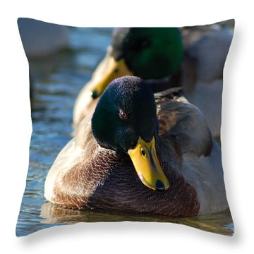 Throw Pillow featuring the photograph Mallard In The Morning Sun by Patrick Shupert