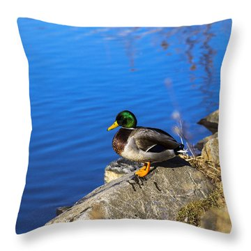 Mallard Looking Over His Domain Throw Pillow