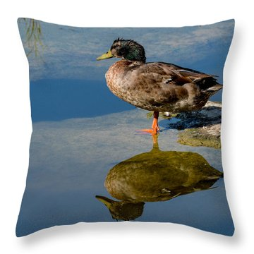 Mallard Reflection Throw Pillow