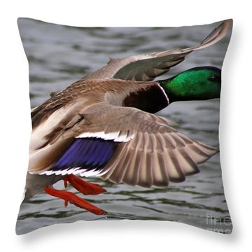 Mallard Set Throw Pillow
