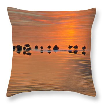 Mallards On Ice Edge During Sunset Throw Pillow