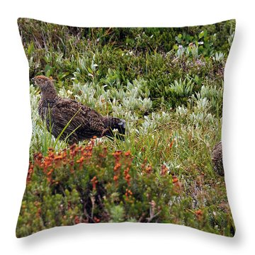 Throw Pillow featuring the photograph Mamma And Chick by Rebecca Parker