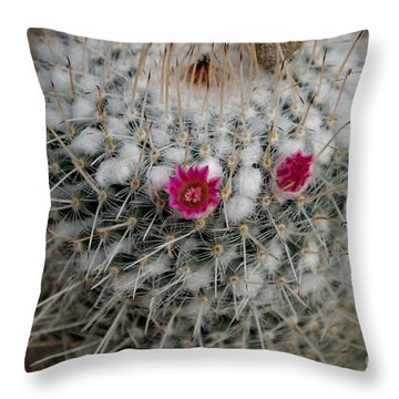 Mammillaria Geminispina Throw Pillow