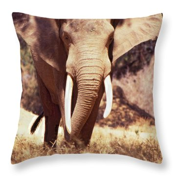 Mana Pools Elephant Throw Pillow