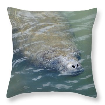 Throw Pillow featuring the photograph Manatee Nose by Bradford Martin