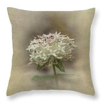 Throw Pillow featuring the photograph Mandy by Elaine Teague