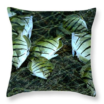 Manini Catch Throw Pillow by Lehua Pekelo-Stearns