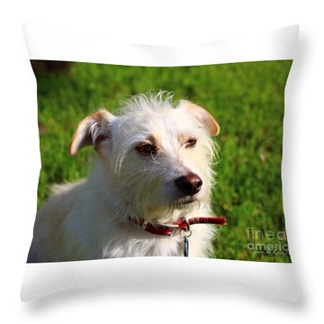 Throw Pillow featuring the photograph Man's Best Friend by Kevin Ashley