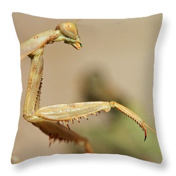 Mantis On The Hunt Throw Pillow by Shoal Hollingsworth
