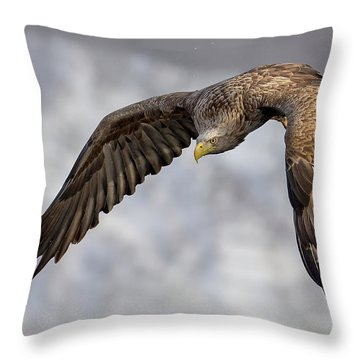 Asia Throw Pillows