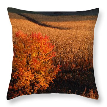 Maple And Cornfield At Dawn Throw Pillow by Larry Ricker