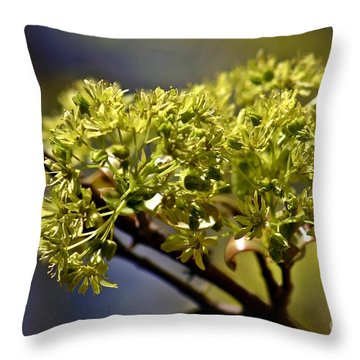 Throw Pillow featuring the photograph Maple Leaf In Spring by Henry Kowalski