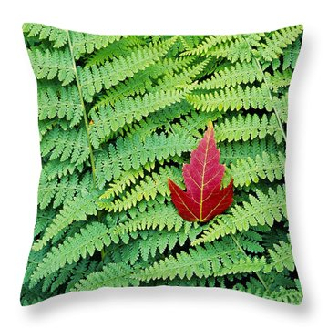 Throw Pillow featuring the photograph Maple Leaf On Ferns by Alan L Graham