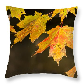 Maple Leaves In Autumn Throw Pillow