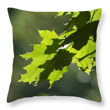 Maple Leaves In Summer Throw Pillow