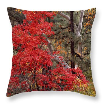Maple Sycamore Pine-h Throw Pillow