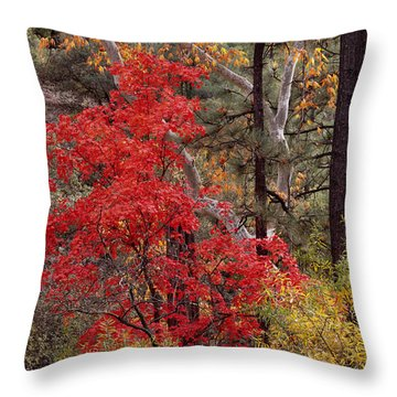 Maple Sycamore Pine Throw Pillow