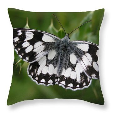 Marbled White Throw Pillow by Ron Harpham