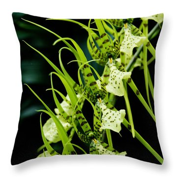 Throw Pillow featuring the photograph Marching Orchids by Eva Kaufman