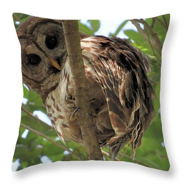 Throw Pillow featuring the photograph Marcus' Backyard Hooter by AnnaJo Vahle