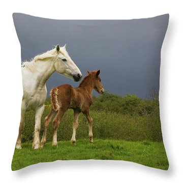 Mare And Foal, Co Derry, Ireland Throw Pillow